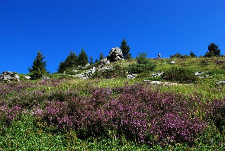 Callune, Béruée - lande © Bernard Nicollet - Parc national des Ecrins