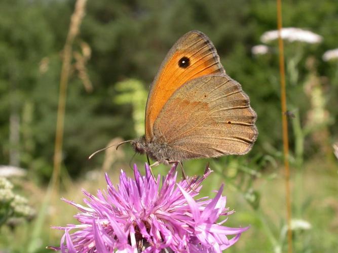 Myrtil © Blandine Delenatte - Parc national des Ecrins