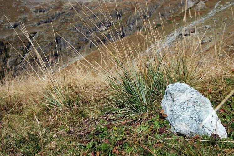 Queyrel © Olivier Warluzelle - Parc national des Ecrins